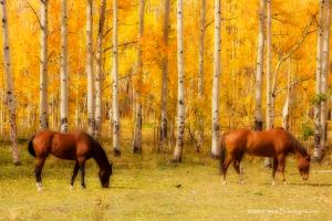 For Immediate Release New Equine Autumn In Colors Prints